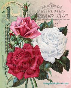 Catalog Information Company Name: The Geo. Mellen Co. Catalog Title: Condensed Catalogue of Special Offers in Choise Plants, Seeds & Fruit Publication Information: Springfield, OH United States Category(ies) of Cover Art: Roses Rose Vintage, Pub Vintage, Vintage Rosen, Vintage Flowers, Vintage Art, Vintage Floral, Decoupage Vintage, Vintage Ephemera, Vintage Postcards