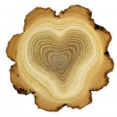 Free art print of Heart of tree - growth rings of acacia tree - cross section. Heart of tree. Modified photo of growth rings of acacia tree - cross section. Theme of love, friendship, secret. Isolated on white background. I Love Heart, With All My Heart, Happy Heart, Love Is All, Humble Heart, Heart In Nature, Heart Art, Cross Section, Tree Rings