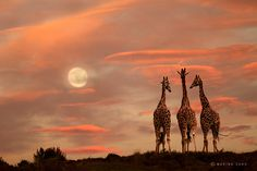 Moonrise at Cabarceno Wildlife Park, in Cantabria Spain.