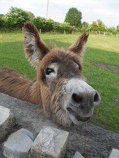 A friendly donkey that we met! by Twoshoes3, via Flickr