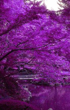 COLOR MORADO ❤ PÚRPURA ❤ In Lavender #preciousmomentliving