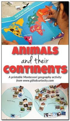 Animals and their continents: A printable Montessori activity to teach kids about the animals native to each of the seven continents. This activity makes geography fun!    Gift of Curiosity