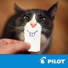 Kdo z vás to jde zkusit? :D #funny #cat #pilotpen