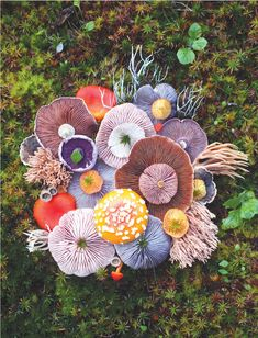 jill bliss forages flora to form magical mushroom medleys - - on daily wanderings across the islands of the pacific northwest, artist jill bliss finds some strange and surreal species of plants and animals. Mushroom Art, Mushroom Fungi, Mushroom Species, Wild Mushrooms, Stuffed Mushrooms, Inspiration Artistique, Posca Art, Plant Fungus, Fotografia Macro