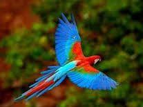 Resultado de imagem para aves lindas