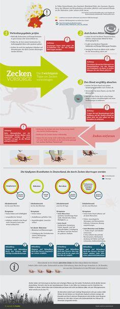 Zecken bei Hunden – Vorkommen, Krankheiten & Vorsorge. Weitere Infos…