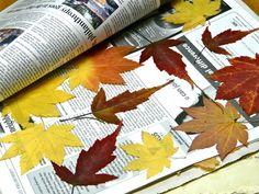paint dried leaves with Mod Podge to preserve color & flexibility