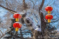 "Four chinese lanterns hanging from a tree on both sides in winter with the characters for ""Get a fortune"""