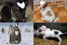loveable beasts for valentine's day!