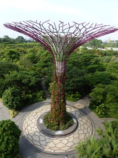 One of the Super Trees in Gardens by the Bay in Singapore.  A must see in Singapore.