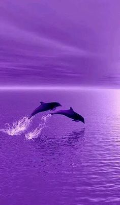 I 💜 U, cos you're PURPLE. Dolphins surfing in purple sunset! Purple Sunset, Purple Love, All Things Purple, Shades Of Purple, Deep Purple, Pastel Purple, Light Purple, Purple Wallpaper, Purple Backgrounds