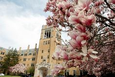A beautiful picture of Saint Mary's College in Notre Dame, IN. Spring has sprung!