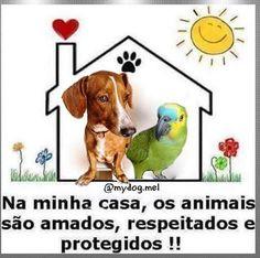 NA MINHA TAMBÉM! <3 #petmeupet #amoanimais #euprotejo #cachorro #gato
