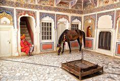 At the castle - Marwari mare Mumal with an Indian at Mandawa Castle
