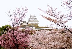 Why You Should Visit Japan During Cherry Blossom Season