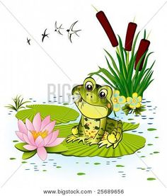Cute Frog With Mosquito Frogs E Ba Frog Illustration Frog - Find Cute Frog And Snail Cartoon With Mushrooms Stock Vectors And Royalty Free Photos In Hd Explore Millions Of Stock Photos Images Illustrations And Vectors In The Shutterstock Creative Collec Funny Frogs, Cute Frogs, Basic Drawing For Kids, Inkscape Tutorials, Amazing Frog, Frog Illustration, Pond Painting, Frog Drawing, Frog Pictures