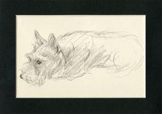 1937 Matted Vintage Dog Print Scottish Terrier Scotch Scottie Lucy Dawson Puppy Animal Pet Decor Art Gift Small Dog Sketch Black and White
