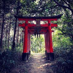 【crafthain】さんのInstagramをピンしています。 《行けば帰ってこれなさそうな感じ、、 it looks like, once you go otherside you can never come back.. #design #spiritual #forest #nature #life #human #tradition #travel #スピリチュアル #森 #ライフ #人間 #伝統 #旅 #japan #kyoto #日本  #京都 #fushimiinari #伏見稲荷大社 #shrine #shinto #神道 #torii #鳥居 # #architecture  #horror #mystery #creepy #不気味》