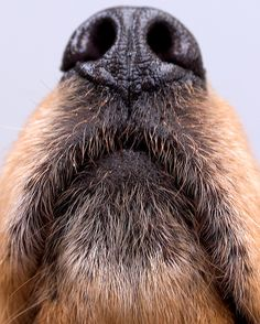 Alex Sniffing Out A Macro Lens by Andrew Morrell Photography, via Flickr
