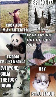 ,Funny Animals