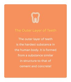 Check out today's fun fact about the outer layer of teeth!