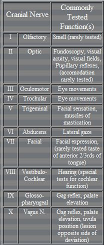 Cranial Nerves: The Neurology Exam.Made Simple - Videos of different examinations Nursing Notes, Nursing Tips, Nursing Board Exam, Ob Nursing, Pa School, Medical School, School Tips, Nbcot Exam, Nursing Students