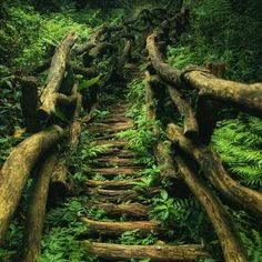 Wooden stair pathway