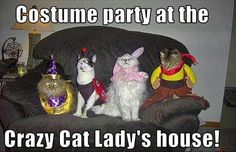 Cats at a Halloween Party. Who has the Meow Mix?