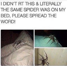 I HATE SPIDERS AND I AM. NOT. RISKING. IT.