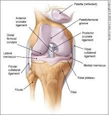 orthopedic knee tests - Google Search