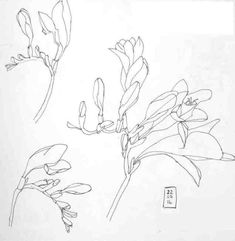Contour drawing by artist Vicki Hutchins