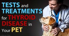 Dr. Jean Dodds discusses the importance of using the right tests to accurately assess thyroid function in dogs and cats. http://healthypets.mercola.com/sites/healthypets/archive/2015/05/10/pets-thyroid-disease-tests-treatments.aspx