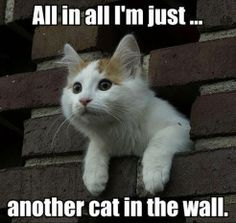 A special cat in the wall.
