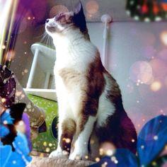 Cat & Butterflies:-)  #cameranapp