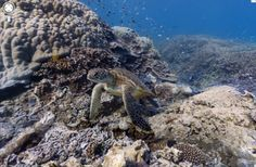 Google Street View is no longer limited to roads and sidewalks — now, you can browse stunning panoramic images from under the sea: http://on.mash.to/Pn8HxF