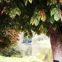 #herfst ruiken. #semois #bohan #schoonweer #poweredbyrenee