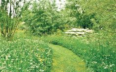 Stillingfleet Lodge Gardens meadow