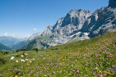 Take a nap in an alpine meadow. Photo by Isabella Pfenninger