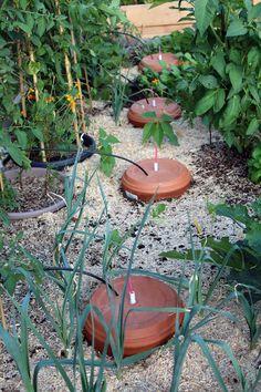 [Arrosage] Des Ollas plus grandes, plus simples, plus efficaces Garden Design, Garden Irrigation, Permaculture, Plants, Outdoor Gardens, Garden Design Plans, Garden Layout, Garden Landscaping, Gardening Tips