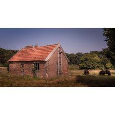 Ponies in Leur  #leur  #wychen  #gelderland  #netherlands  #nederland  #igworldclub  #igs_europe  #super_holland  #wonderful_holland  #superhubs  #dutch_connextion  #ig_nederland  #best_photoshot  #justgotravelSC  #iglobal_photographers  #igholland  #wanderlust  #igersholland  #holland_photolovers  #picture_to_keep #ig_discover_holland #hollands_best_pictures #mybestcityshots #besteuropepics  #canonnederland