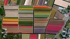 Stunning Satellite Images from Daily Overview and Digital Globe - weather.com Colorful tulip fields in Lisse, Netherlands