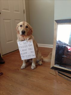 Dog shaming, golden retriever