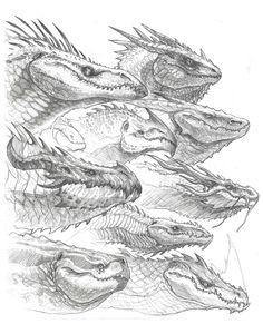 Dragon Head Sketches, John Tedrick on ArtStation at https://www.artstation.com/artwork/ZXyNx