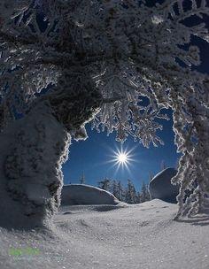 Зимнее вдохновение   Интере�ный контент в группе Садова� Фе� - Дом, дача, �ад и огород