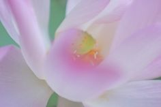 I can't yet sit still for meditation. But I can watch a lotus blooming patiently. You should try, quite a sensation.