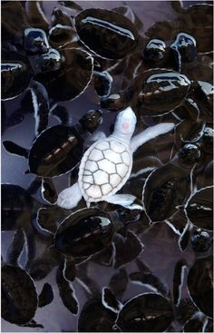 A very cute turtle you dont see very often