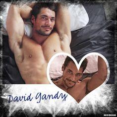 David James Gandy