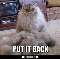 Put It Back #lol #haha #funny
