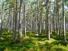 Piękne polskie lasy