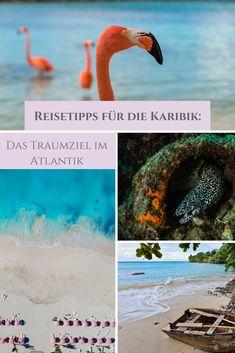 Was gibt es schöneres als die Karibik?! Weiße Sandstrände, türkisfarbenes Meer und ein endloser Sommer erfreuen Sonnenanbeter, Badeurlauber und Wassersportler. #sonnenklarTV #karibik #kuba #jamaika #domrep #dominikanischerepublik #grenada #barbados #strand #meerweh #reisefieber #traumreise